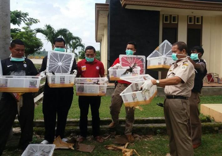 10.645 Burung Liar Sitaan Dilepasliarkan