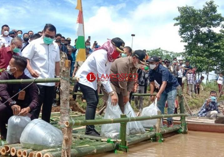 100 Ribu Benih Ikan Jelabat Ditabur di Way Tulangbawang