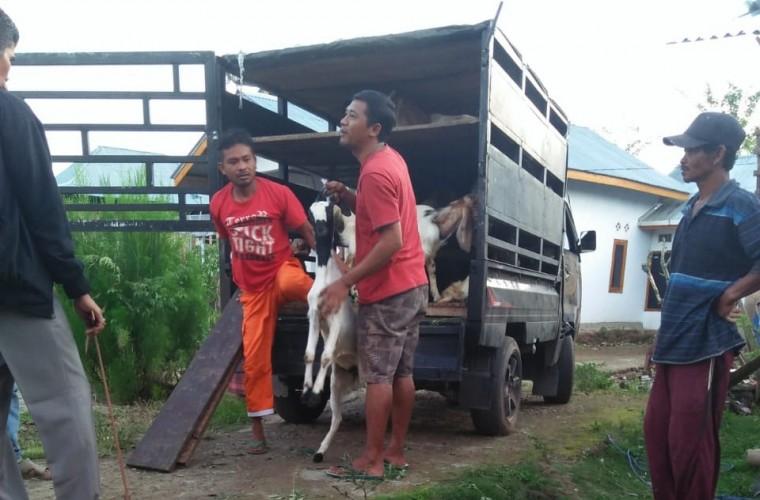 15 Kelompok Tani Kopi di Lambar dapat Bantuan 300 Ekor Kambing