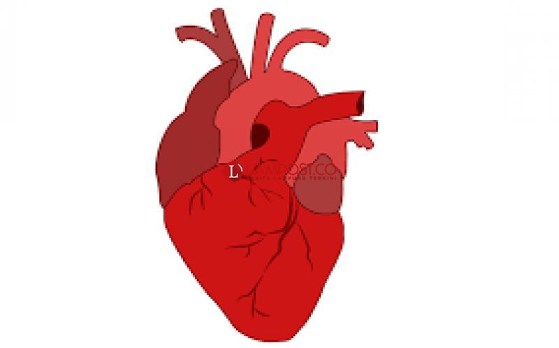 Jantung Berhubungan dengan Alzheimer