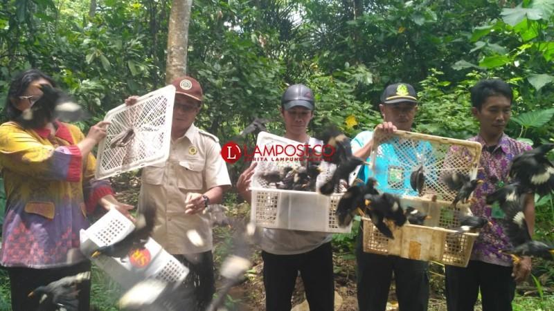 Flight Protecting Indonesia Birds-Balai Karantina Lepasliarkan Ribuan Burung di Tahura