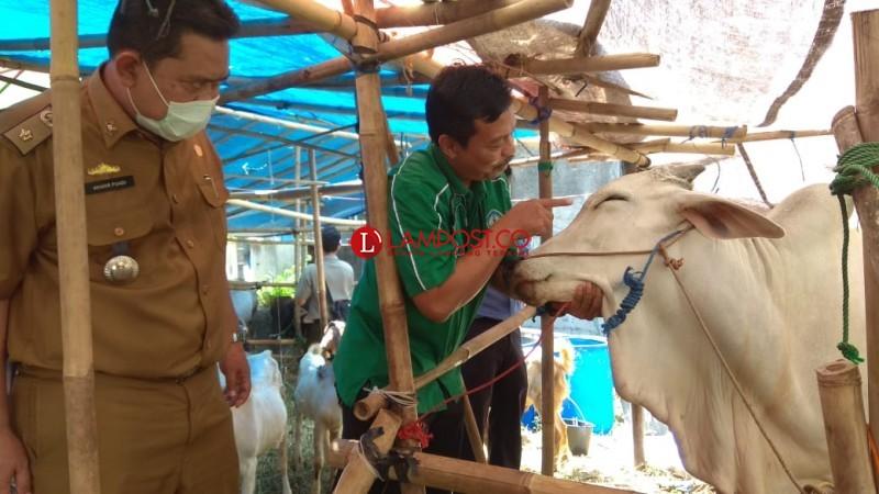 Puluhan Hewan Ditemukan Tak Layak Kurban di Lapak Pedagang