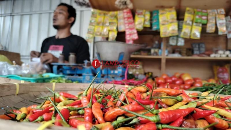 Harga Cabai Rawit Merah di Lamsel Tembus Rp100 ribu