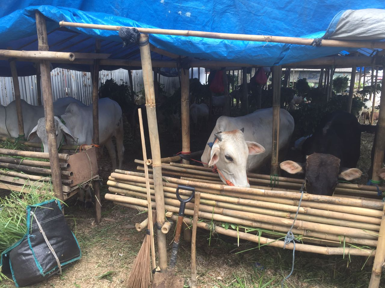 Pendirian Pasar Hewan Dorong Penguatan Ekonomi Sektor Peternakan