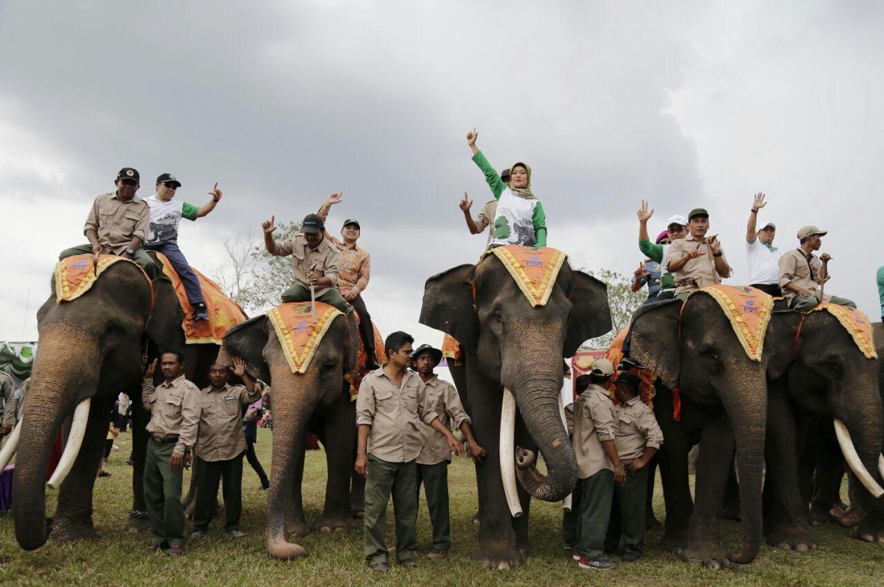 Festival Way Kambas Merupakan Ajang Promosi Pariwisata dan Pelestarian Satwa