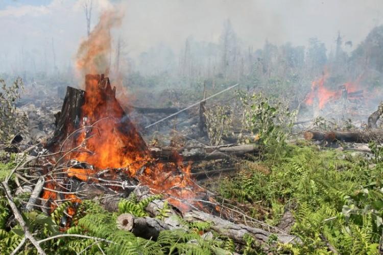 4 Korporasi Dalang Pembakaran 496 Hektar Lahan
