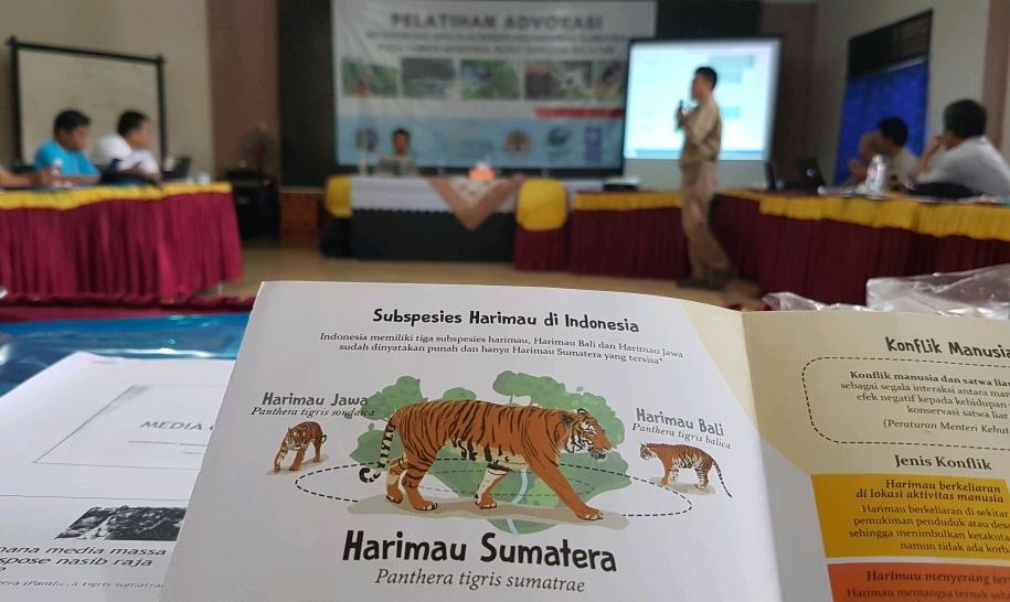 Kunci Kelestarian Harimau Sumatera, Masyarakat harus Paham Informasi Harimau