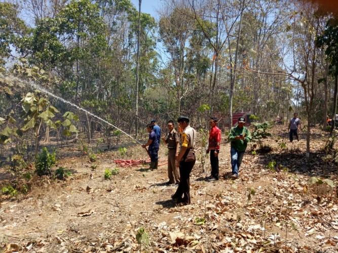 5 Hektare Kebun di Lamsel Terbakar