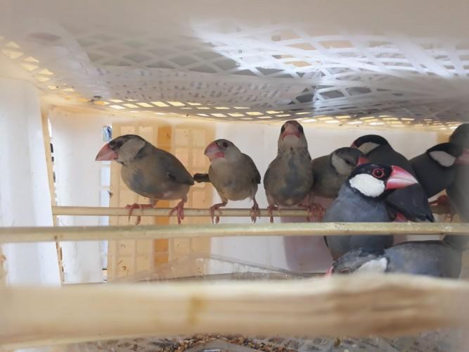 67 Ribu Burung Liar Gagal Diselundupkan Selama Dua Tahun
