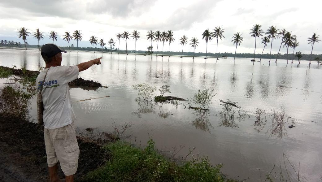 Tanaman Padi Puso Akibat Banjir di Sragi Capai 254 Ha