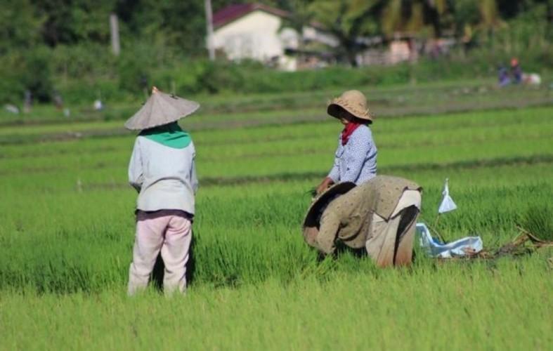 90 Persen Petani Memasuki Fase Kurang Produktif
