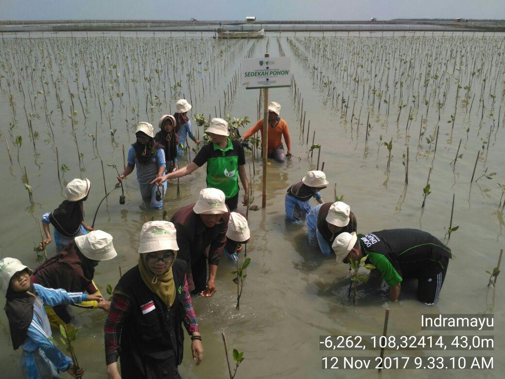 Cegah Abrasi, DompetDhuafa Tanam 7.000 Pohon Mangrove