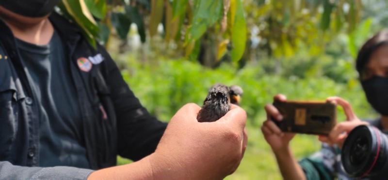 986 Burung Dilepasliarkan di Tahura Wan Abdurachman
