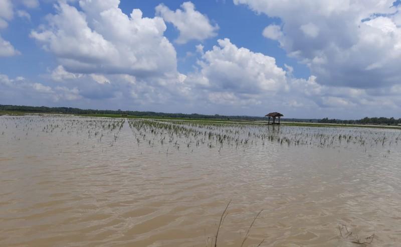 988 Hektare Sawah di Lamtim Terendam Banjir