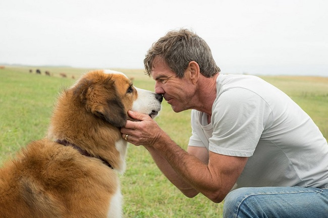 Anjing dan Jodoh
