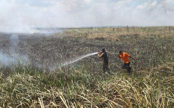 Pastikan Kebakaran Hutan dan Lahan, Manggala Agni Terjun ke Lapangan