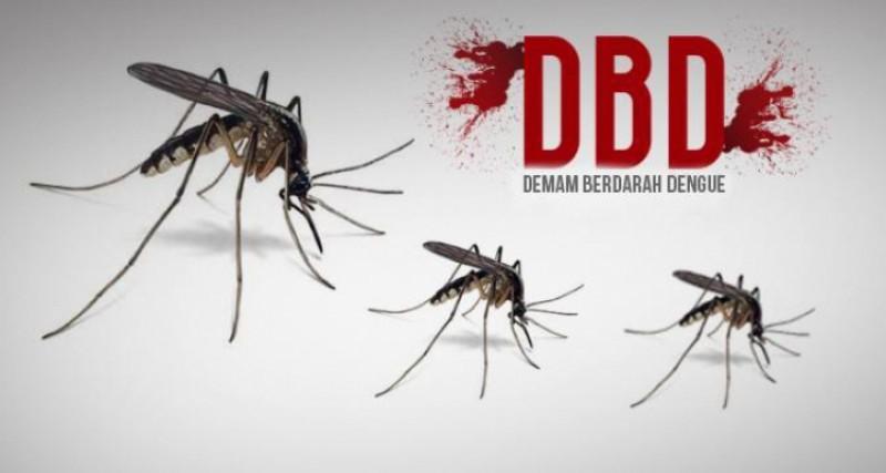 Angka Kasus DBD di Lamsel Turun Dibanding 2019