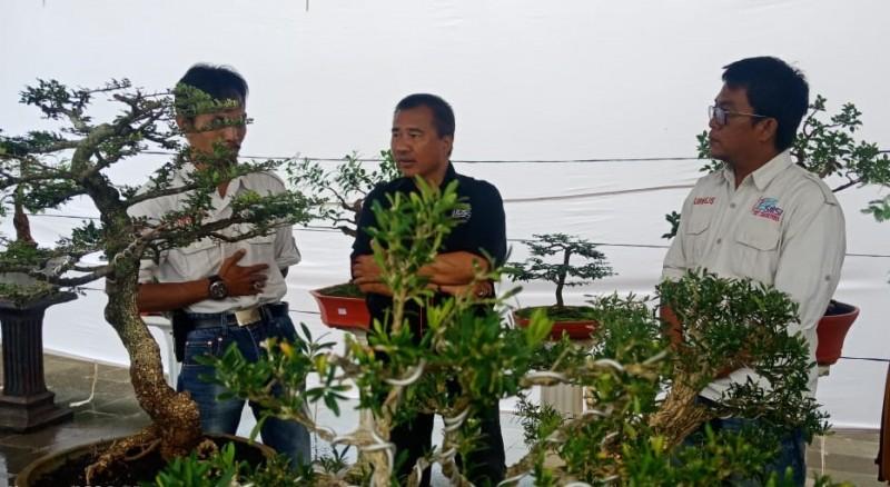 Angkat Potensi Daerah Lewat Bonsai