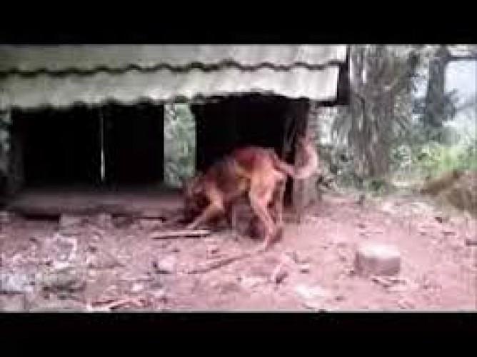 Anjing Liar Yang Menggigit Warga Desa Sumberarum Tertangkap