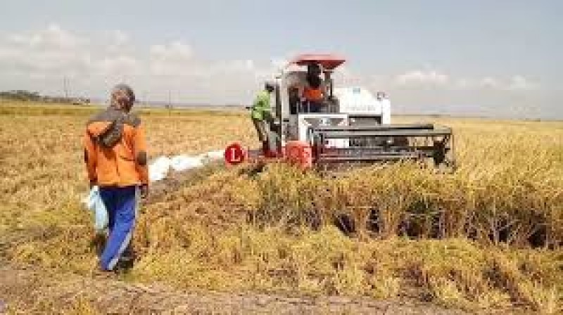 Antisipasi Korona, Petani di Candipuro Diminta Panen Padi dengan Mesin