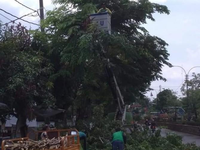 Antisipasi Pohon Tumbang, Pemkab Lampura Lakukan Pemangkasan Pohon