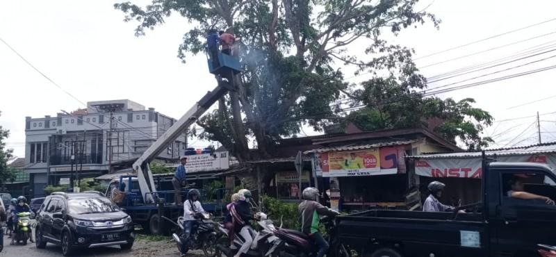 Antisipasi Pohon Tumbang, Pemkot Tebang Pohon Tua