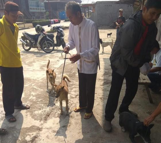 Antisipasi Rabies, 150 Anjing dan Kucing di Pekon Bedudu Divaksin