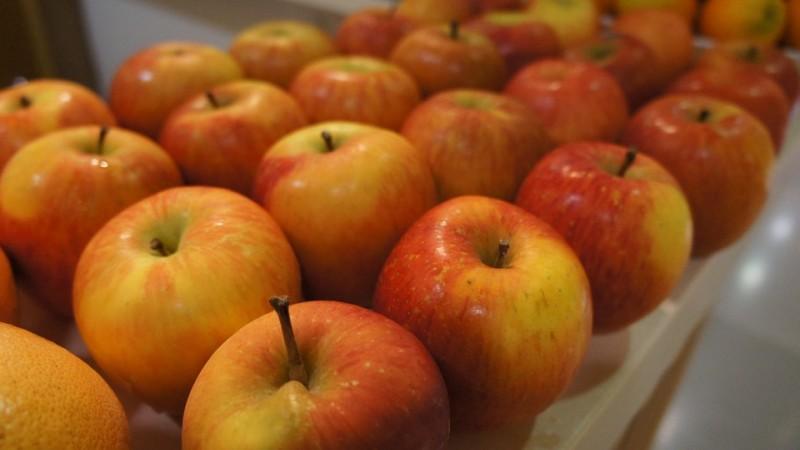 Apel Organik Lebih Baik