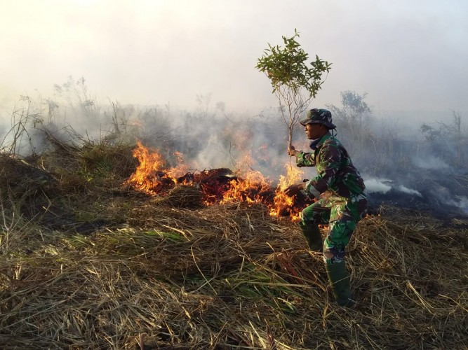 Api Kembali Bakar Lahan di Mesuji