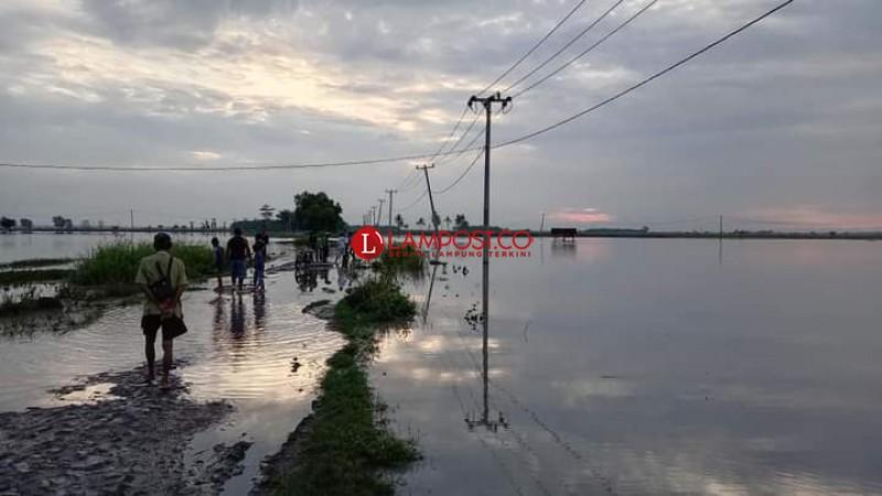 Areal Sawah Terendam Banjir di Palas Meluas
