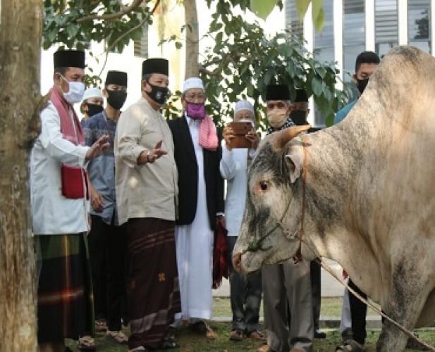 Arinal Serahkan 2 Sapi Kurban untuk NU dan Muhammadiyah