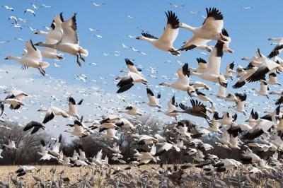 Iklim dan Migrasi Burung