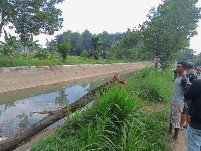 Bangkai Pohon Tumbang Bikin Sampah di Irigasi Tejosari Menumpuk