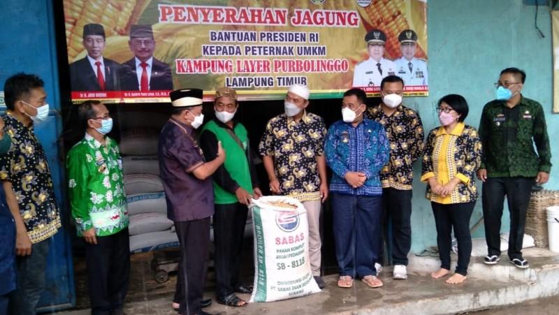 Bantuan Pakan Jagung 200 Ton untuk Peternak Empat Kabupaten di Lampung