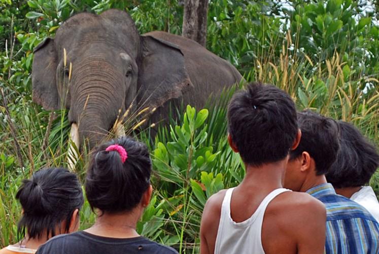 Belasan Gajah Liar Rusak Bangunan Warga