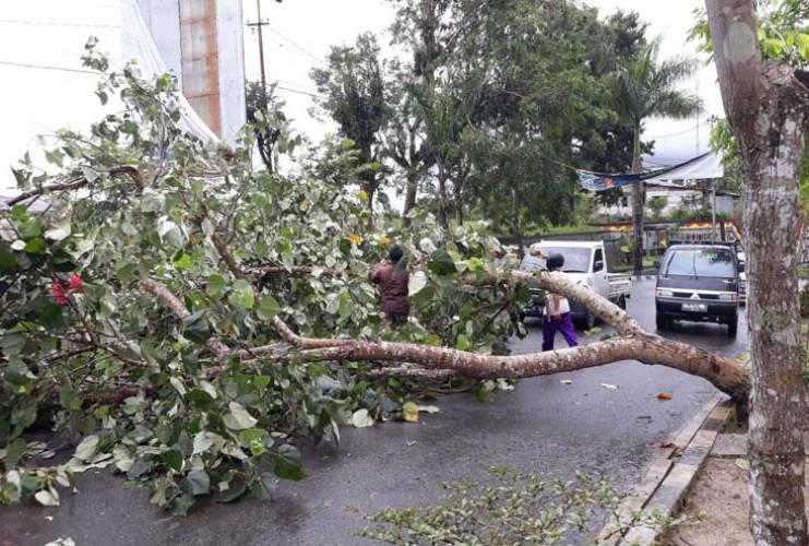 Belasan Pohon di Bandar Lampung Tumbang Dalam Sepekan