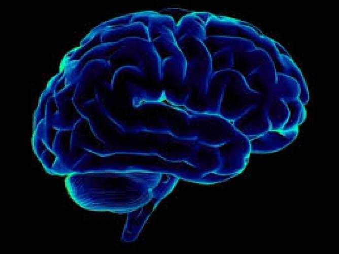 Bentuk dan Penyusutan Otak