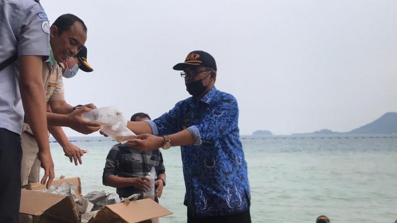 Benur Ilegal Sitaan Dilepas Liar di Pantai Hurun