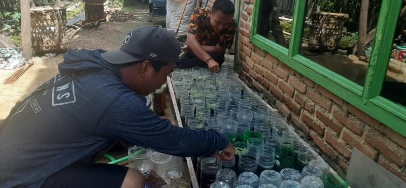Berkah Penjual Ikan Hias Lampura di Tengah Covid-19