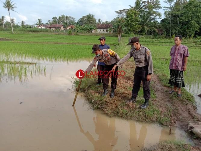 Bermain di Sawah, Bocah di Candipuro Ditemukan Tewas Tenggelam