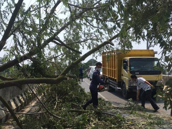 BPBD Bandar Lampung Evakuasi Pohon Tumbang di <i>Flyover</i> Pramuka