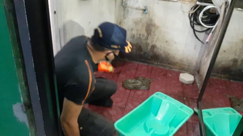 BPBD Evakuasi Ular di Kamar Mandi Warga Labuhan Ratu