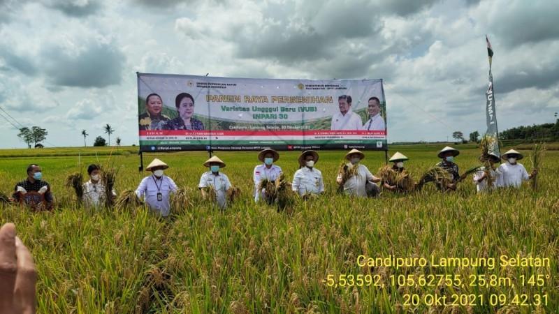 BPTP Lampung Gelar Panen Raya Padi Inpari 30 di Candipuro