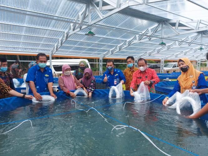 Budidaya Ikan Sistem Bioflok Tingkatkan Produksi Perikanan Lampung