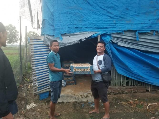 BUMN Berdikari Bawa Harapan Baru Peternak Ayam Lampung