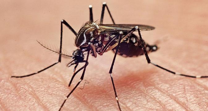 Golongan Darah O Lebih Disukai Nyamuk