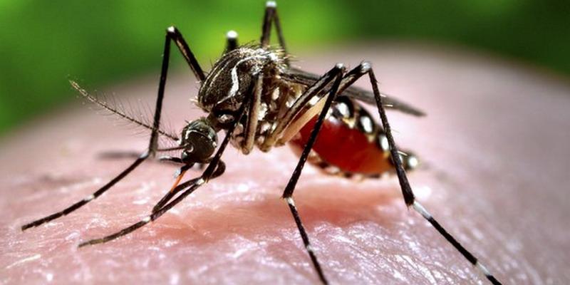 Cegah DBD, Hindari Gigitan Nyamuk Pagi-Sore Hari