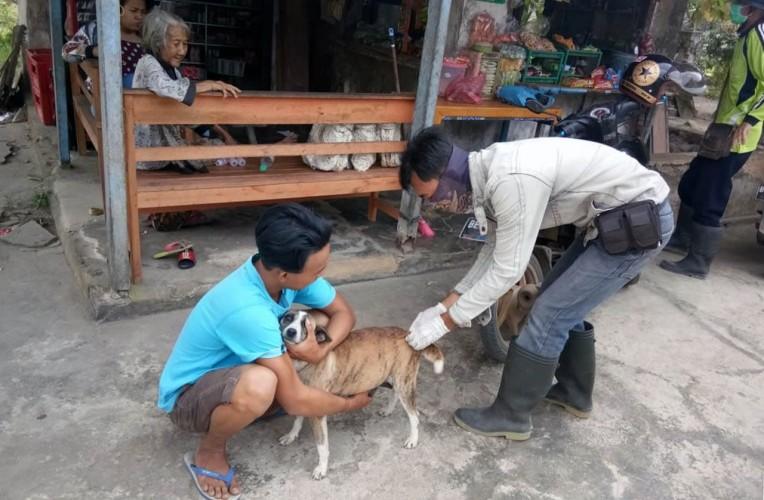Cegah Rabies, Dinas Peternakan Lamsel Vaksinasi di 17 Kecamatan