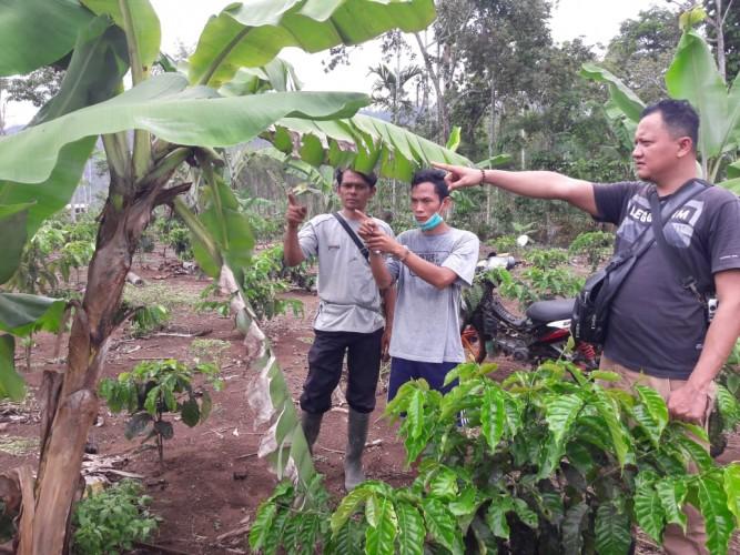 Curi Pisang di Kebun, 2 Warga Pulau Panggung Dibekuk