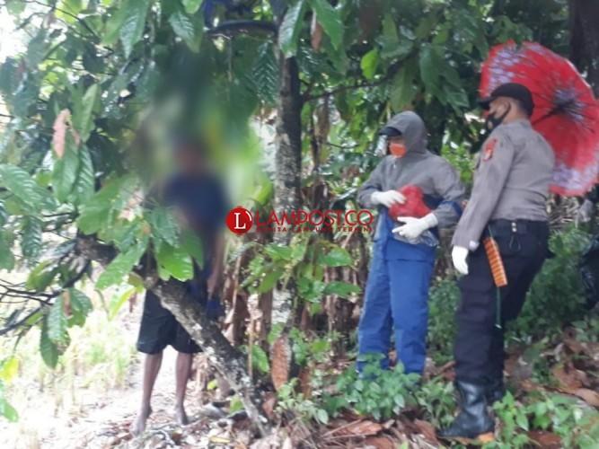Diduga Depresi, Mbah Sarnak Nekat Gantung Diri di Pohon Kakao